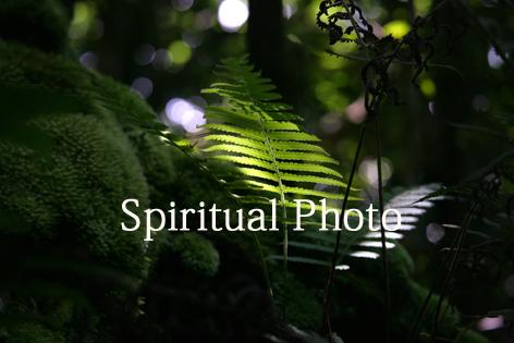 見本Mmini太古の森のコピー.jpg